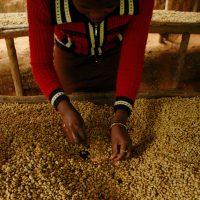 Ochutnejte naši novou Rwandu Muhondo!