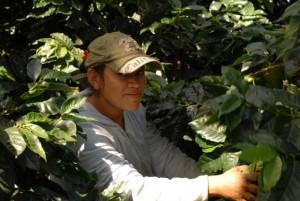 Nikaragua Finca El Guayabo