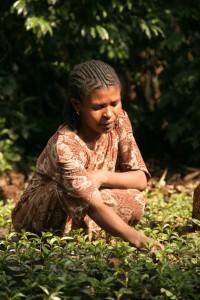 Etiopie_Konga_Beraso_IMG_2074